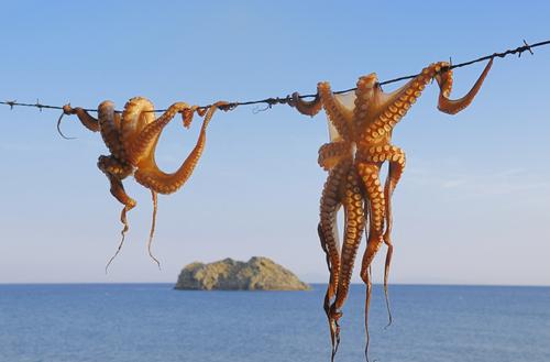 octopus 92433619