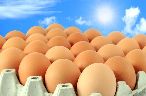 egg sky 107735699