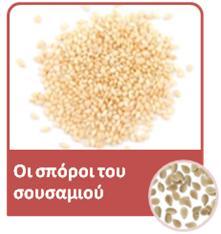 02 seeds