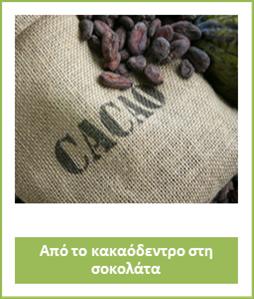 cocoa1st