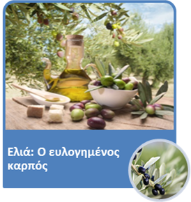 olive04