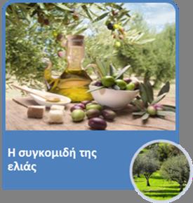 olive05