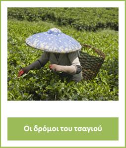 tea1st