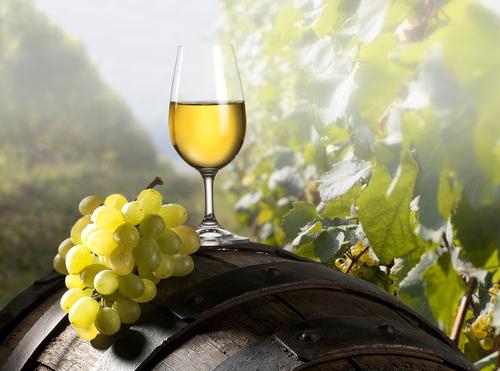 grape 51927529