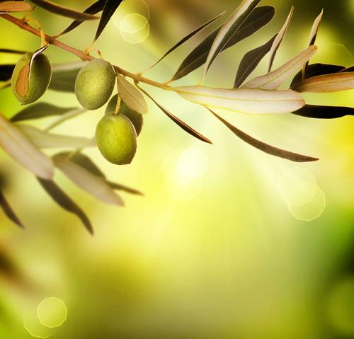 olives 84462370
