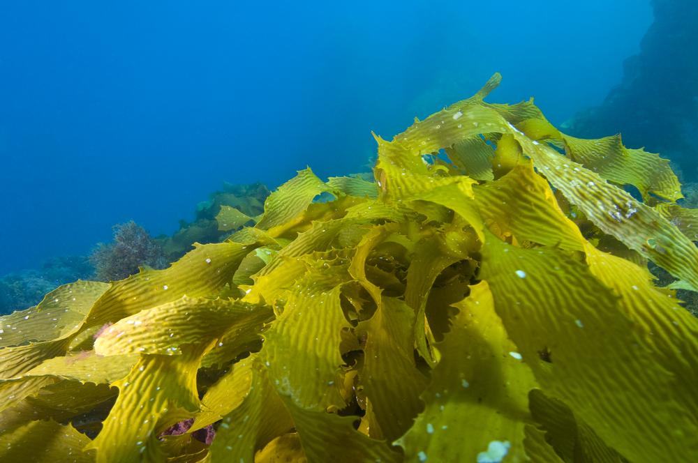 seaweeds green-31282249