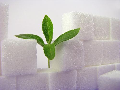 stevia1 63053266