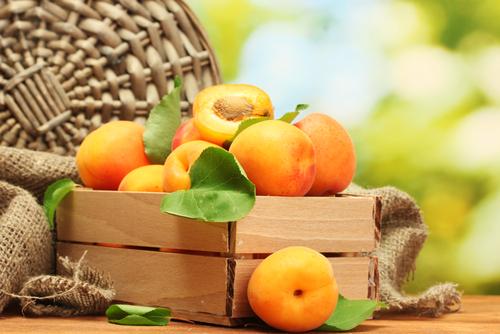 apricot 106604543