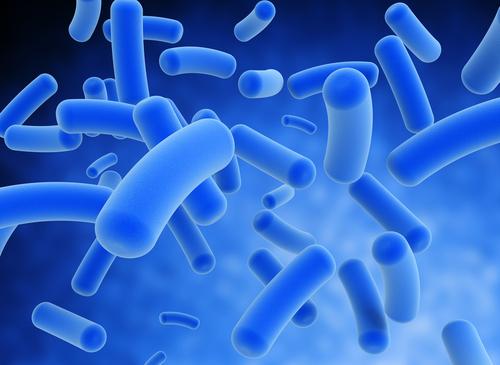 bacteria 72489532