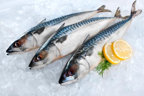mackerel 94725520