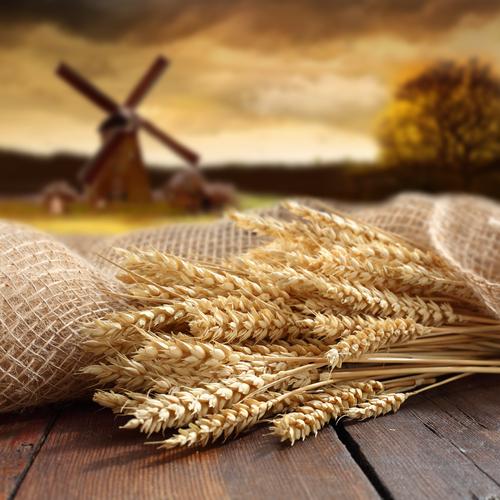 oats 103076027