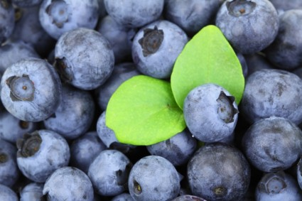 background berry blue 268554